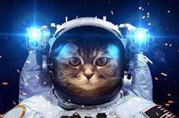 5510108732 Puzzle DLOPK - Chat Astronaute - 1000 Pieces